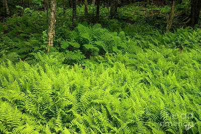 Photograph - Forest Floor Covered In Ferns by Alana Ranney