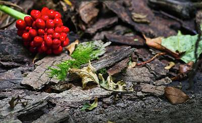 Photograph - Forest Floor by Garvin Hunter