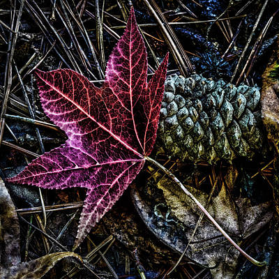 Photograph - Forest Floor by Joe Shrader
