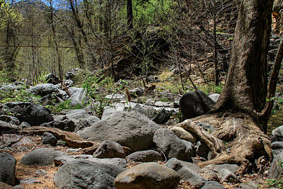 Photograph - Forest Floor Near Oak Creek by Bonnie Follett