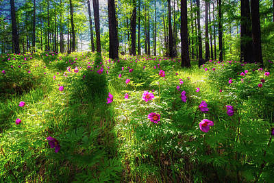 Photograph - Forest Flowers by Kanenori