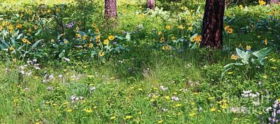 Forest Flowers Landscape Art Print