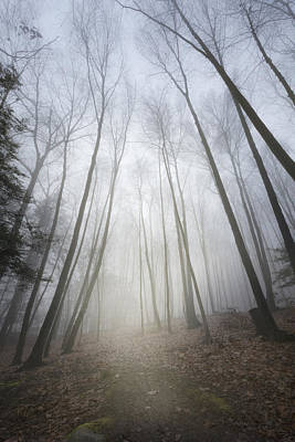 Photograph - Forest Fog by Bill Wakeley