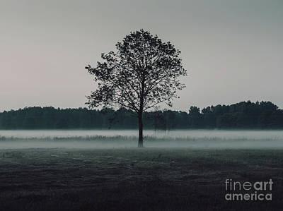 Forest Fog Print by MGL Meiklejohn Graphics Licensing