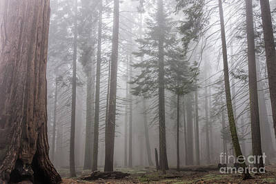 Photograph - Forest Fog by Peggy Hughes