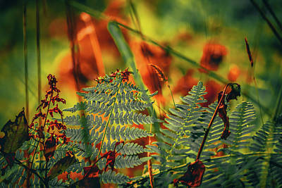 Photograph - Forest Foilage by Bonnie Bruno