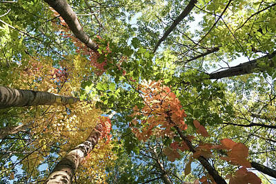 Photograph - Forest Foliage by Nick Mares