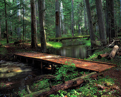 Old Growth Forest Photograph - Forest Foot Bridge by Leland D Howard
