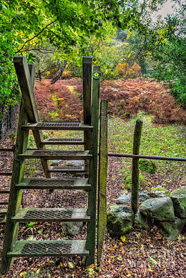 Photograph - Forest Footpath by Adrian Evans