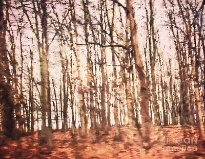 Photograph - Forest Full Of Dreams by Kerri Farley