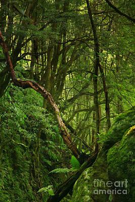 Gaspar Avila Photograph - Forest by Gaspar Avila