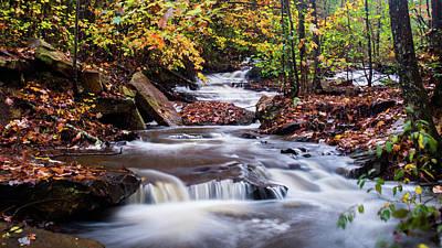 Photograph - Forest Gem by Parker Cunningham