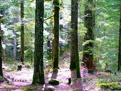 Photograph - Forest Giants by Sadie Reneau