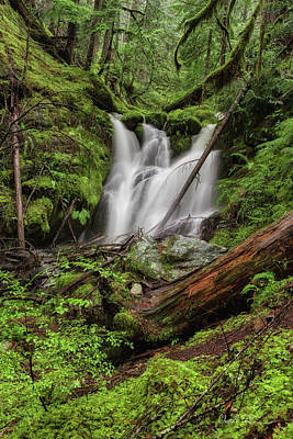 Photograph - Forest Glen Falls by Charlie Duncan