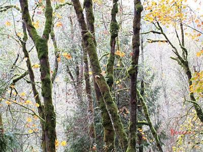 Photograph - Forest Glory 3 by Sadie Reneau