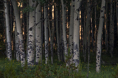 Photograph - Forest Glow by Morris  McClung