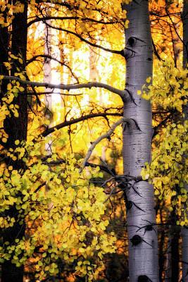Photograph - Forest Gold  by Saija Lehtonen