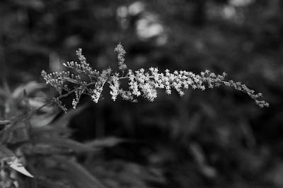 Photograph - Forest Grace Bw by Mary Bedy