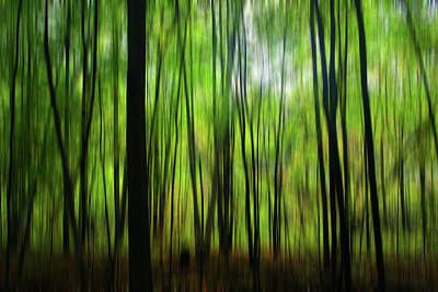 Photograph - Forest Green Abstract by Mary Bedy