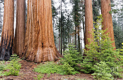 Art Print featuring the photograph Forest Growth by Peggy Hughes