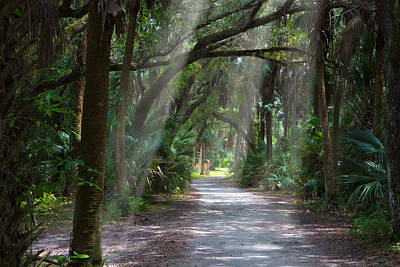 Canopy Photograph - Forest Home by J Darrell Hutto