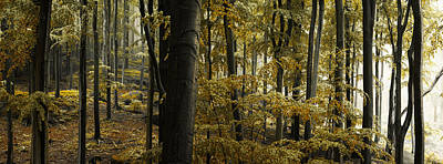 Fall Leaves Photograph - forest I by Lukas Holas