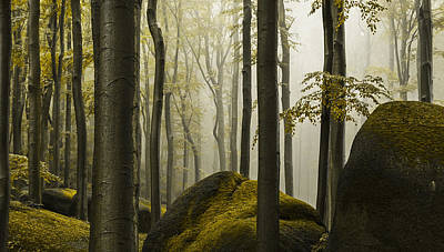 Fall Photograph - forest II by Lukas Holas