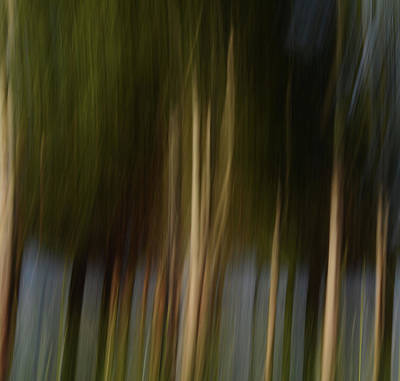 Photograph - Forest Illusion- Mystic Forest by Whispering Peaks Photography