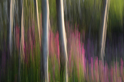 Photograph - Forest Illusions- Aspen And Sweet Peas by Whispering Peaks Photography