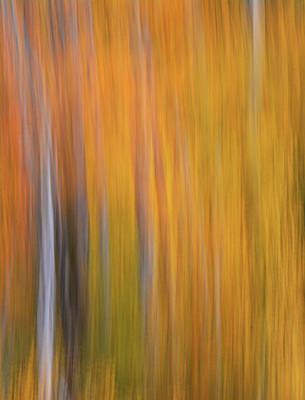 Photograph - Forest Illusions- Aspen Glow by Whispering Peaks Photography