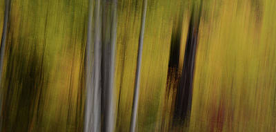 Photograph - Forest Illusions- Autumn Rising by Whispering Peaks Photography
