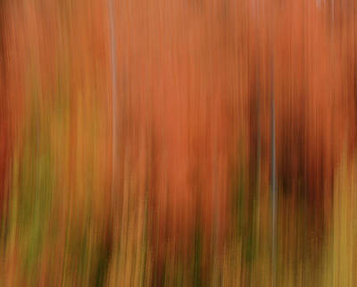 Photograph - Forest Illusions- Autumnal Fire by Whispering Peaks Photography