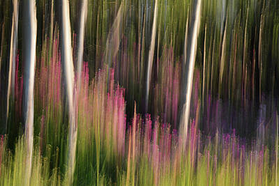 Photograph - Forest Illusions-crescendo At Dawn by Whispering Peaks Photography