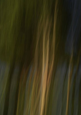 Photograph - Forest Illusions- Golden Threads by Whispering Peaks Photography