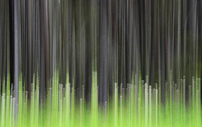 Photograph - Forest Illusions- Lodgepole And Bear Grass by Whispering Peaks Photography