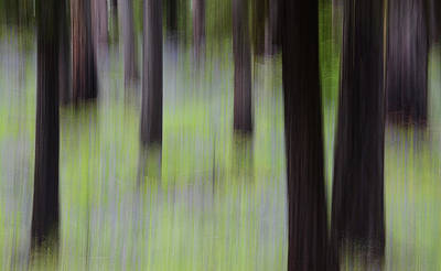 Photograph - Forest Illusions- Lupine And Ponderosas by Whispering Peaks Photography