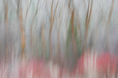 Impressionistic Landscape Photograph - Forest Impression 1 by Leland D Howard