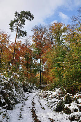 Photograph - Forest In Autumn Leaves Early Snow In October by Martin Stankewitz