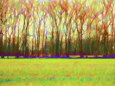 Forest In Autumn Light Art Print