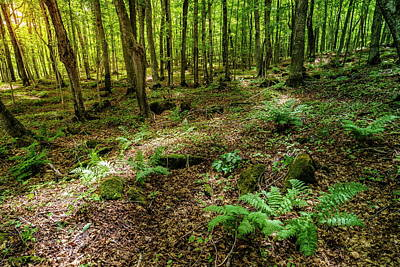 Photograph - Forest In Michigan by Alexey Stiop