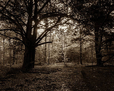 Photograph - Forest In Sepia Tone, Somerset, England, Uk by Jacek Wojnarowski