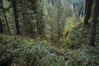 Photograph - Forest In Silver Falls State Park In Oregon  by John McGraw