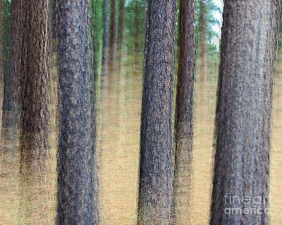 Photograph - Trees by Terry Garvin