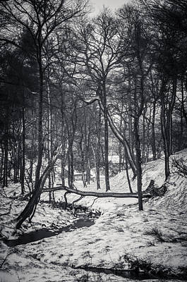 Photograph - Forest In Snow, Peak District, England, Uk by Neil Alexander