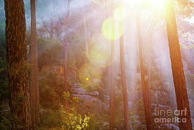 Photograph - Forest In Sunset Light by Anna Om