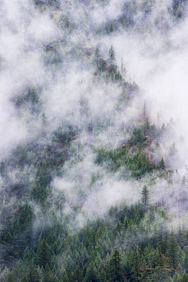 Photograph - Forest In The Fog by Dan McGeorge