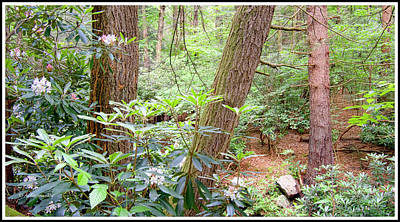 Photograph - Forest Interior With Mountain Laurel by A Gurmankin