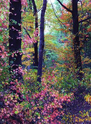 Red Leaf Digital Art - October Forest by Jessica Jenney