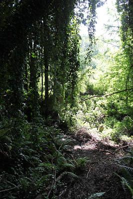 Forest Jungle Art Print