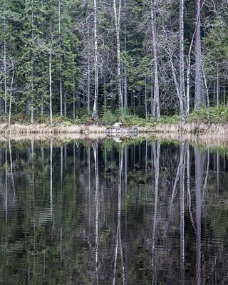 Photograph - Forest Lake by Jakob Dahlin